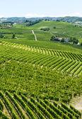 Langhe, viñedos — Foto de Stock