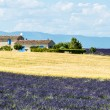 Plateau de Valensole (Provence), house — Stock Photo