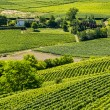 Langhe, vineyards — Stock Photo #32756961