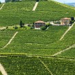 Langhe, vineyards — Stock Photo #32845069