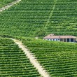 Langhe, vineyards — Stock Photo #32886251