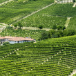 Langhe, vineyards — Stock Photo #33017903