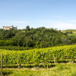 Langhe, vineyards — Stock Photo #33053693