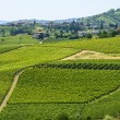 Langhe, vineyards — Stock Photo #33149227