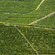 Langhe, vineyards — Stock Photo #33224241