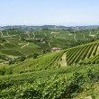 Langhe, vineyards — Stock Photo #33230545