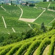 Langhe, vineyards — Stock Photo #33286571
