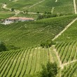 Langhe, vineyards — Stock Photo #33304569