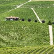 Langhe, vineyards — Stock Photo #33345035