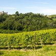 Langhe, vineyards — Stock Photo #33381065