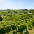 Langhe, vineyards — Stock Photo #33461343