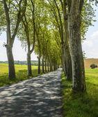 Route près d'albi (france) — Photo
