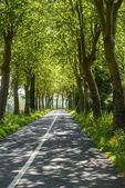 Drodze w pobliżu albi (francja) — Zdjęcie stockowe