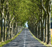 Road near Carcassonne (France) — Stockfoto