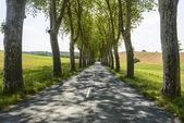 Carretera cerca de albi (francia) — Foto de Stock