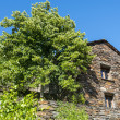 Cevennes: old typical house — Stock Photo #35194617