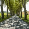 Stock Photo: Road near Albi (France)