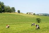 Pasture near Albi (France) — Stock Photo
