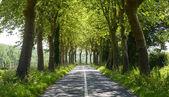 дорога возле альби (франция) — Стоковое фото