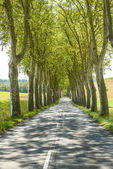 Road near Albi (France) — Stock Photo
