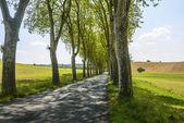 アルビ (フランスの近くの道路) — ストック写真