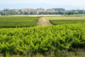 Landscape near Carcassonne — Stock Photo