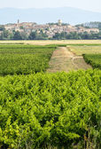 Landscape near Carcassonne — Stock Photo