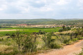 Vineyards in Languedoc-Roussillon — Stock Photo