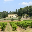 Vineyards in Var (Provence) — Stock Photo #39887971