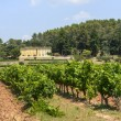 Vineyards in Var (Provence) — Stock Photo #39888027