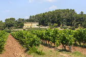 Vineyards in Var (Provence) — Stock Photo