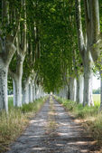 Country road in Provence — Stock Photo