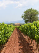 Vineyards in Var (Provence) — Stock Photo