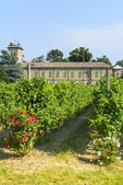 Voghera, school vith vineyard — ストック写真