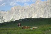 Passo Giau, Dolomites — Stock Photo