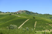 Summer landscape in Langhe (Italy) — 图库照片