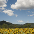 Landscape between Lazio and Umbria (Italy) at summer with sunflo — Stock Photo #7145694