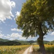 Landscape between Lazio and Umbria (Italy) at summer with sunflo — Stock Photo #7204155