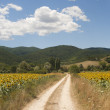 Landscape between Lazio and Umbria (Italy) at summer with sunflo — Stock Photo #7261658
