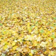 Golden autumn — Stock Photo #14329443
