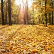 Golden autumn — Stock Photo