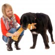 Woman and Dog - Stock Photo