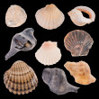 Seashells — Stock Photo #35437039