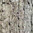 Bark — Stock Photo #37851035