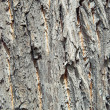 Bark — Stock Photo #37851091