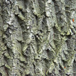 Bark — Stock Photo #37851109