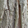 Bark — Stock Photo #37851151