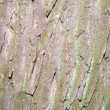 Tree bark — Stock Photo #38004469