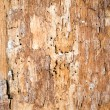 Tree bark — Stock Photo #38004675