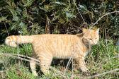 Cat in nature — Stock Photo